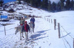 Snow Valley Kufri Shimla