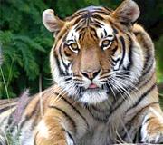 corbett national park india tour
