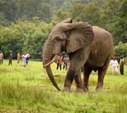 Ghana national park india tourf