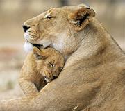 indian wildlife tour