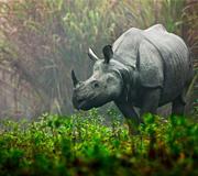 Tribals wildlife india tour
