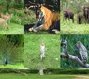 south india bandipur national park