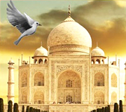 birds and taj tours
