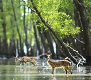 sunderbans national park india tour