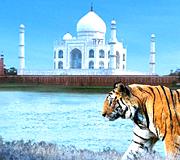 tiger tajmahal and temple