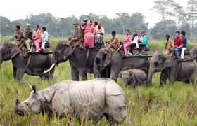 Wild East India Tour