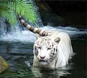 wildlife india tour
