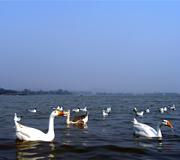 sukhna lake chandrigrah