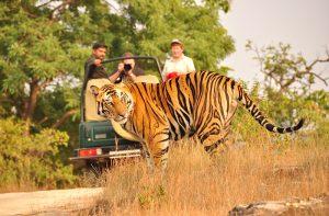 jim corbett national park India Tour