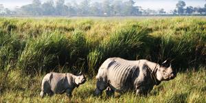 Jorhat National Park Assam