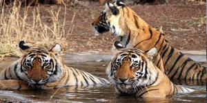 Wildlife of Mount Abu Rajasthan