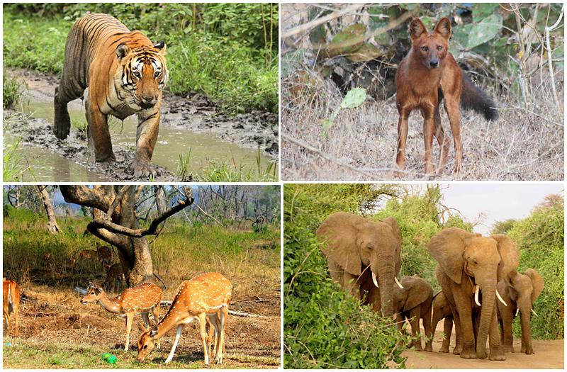 Bandipur National Park Masinagudi Tamilnadu