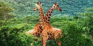 chail-wildlife-sanctuary