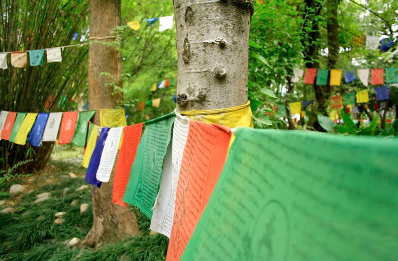 tibetan-dharamkot