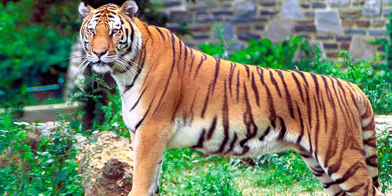 Kalakadu Wildlife Sanctuary Trunelveli Tamilnadu India