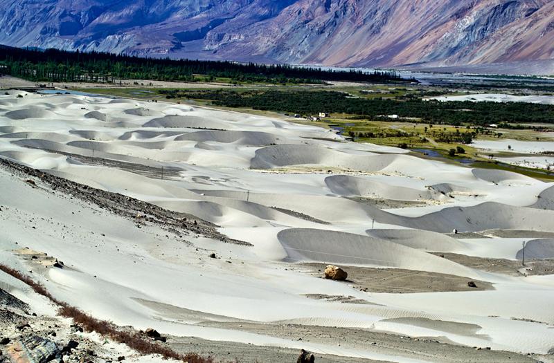 Nubra-Valley-Sand-Dunes Ladakh