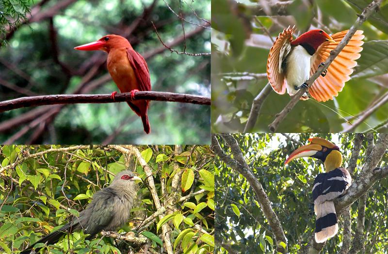 Sundarban National Park West Bengal