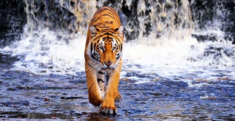 Sundarban Tiger Reserve West Bengal
