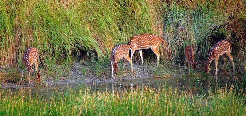 Sundarban West Bengal