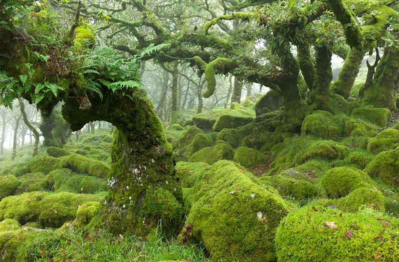 Verdant-forest-kuari-pass-trek