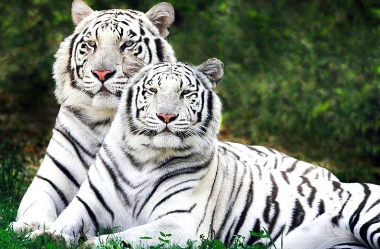 Sundarban-National-Park (West Bengal)