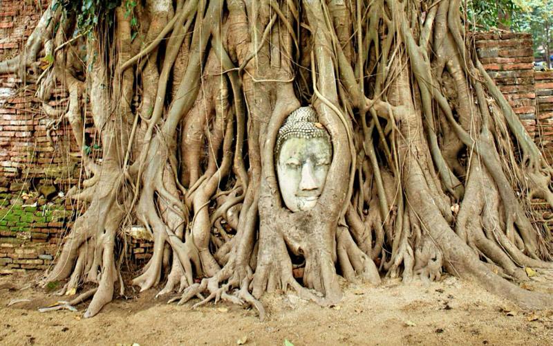 Bodhi-tree-temple-tour