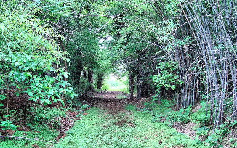 dumna-nature-reserve-park-jabalpur Madhya Pradesh India