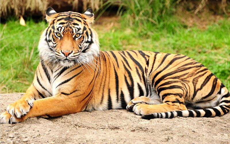 jabalpur-tiger-reserve Jabalpur India
