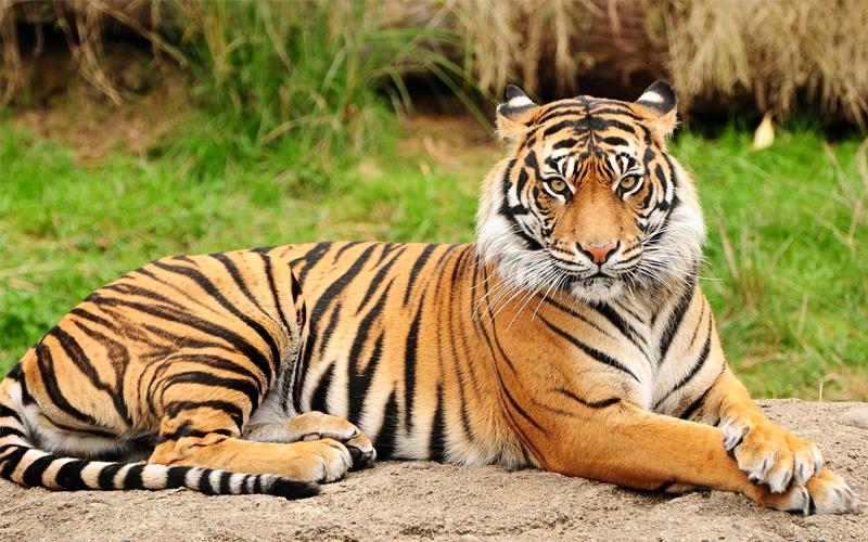 luchnow-zoo Lucknow Uttar Pradesh