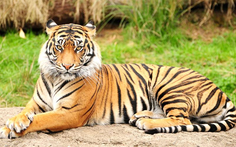 bhadra-wildlife-sanctuary-chikmagalur