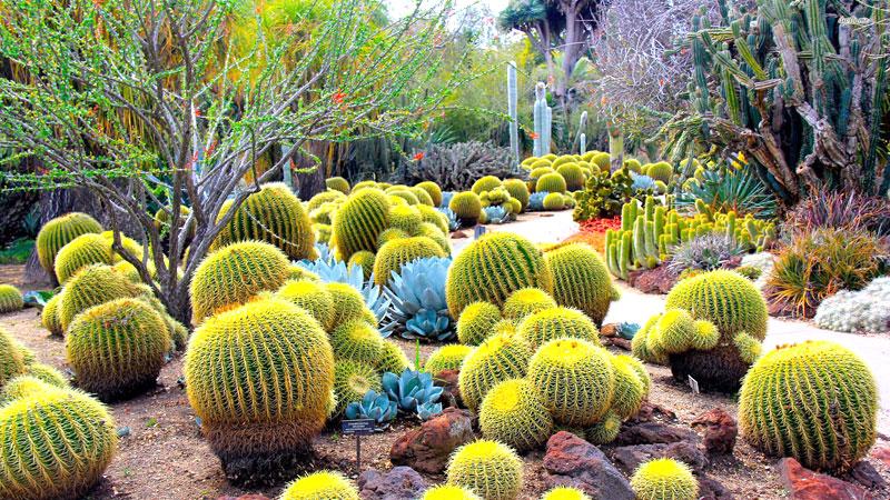 cactus-garden-parwanoo