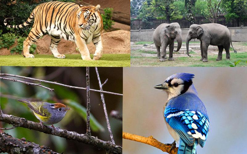 fambong-la-wildlife-sanctuary-gangtok