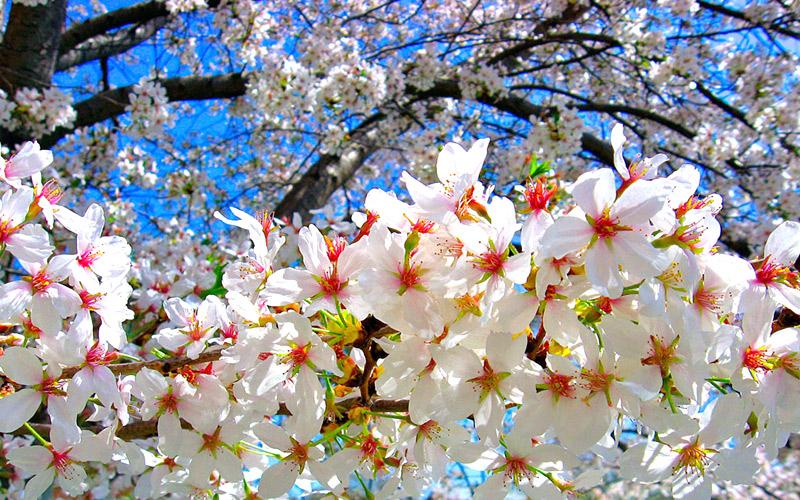 neelakurinji-blooms-chikmagalur karnataka