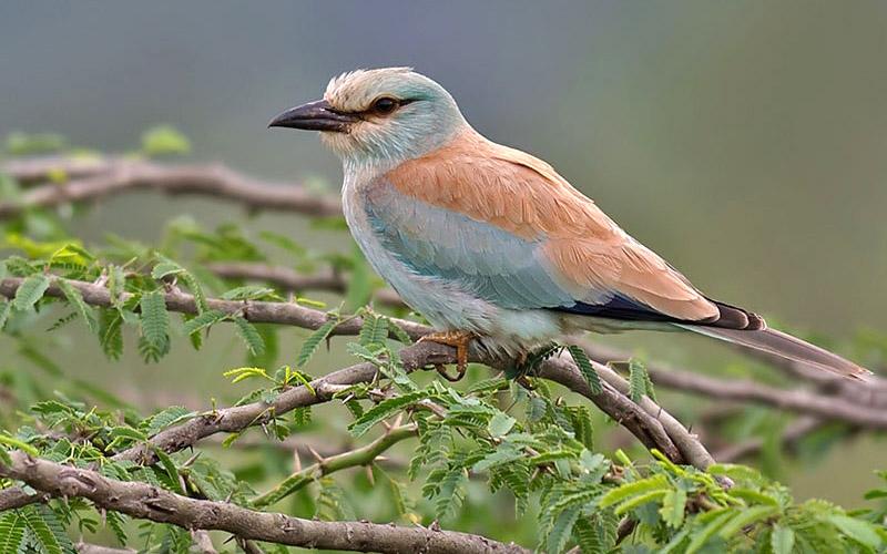eaglenest-wildlife-sanctuary-tawang