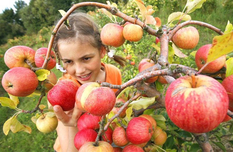 apple-orchards-bombdila