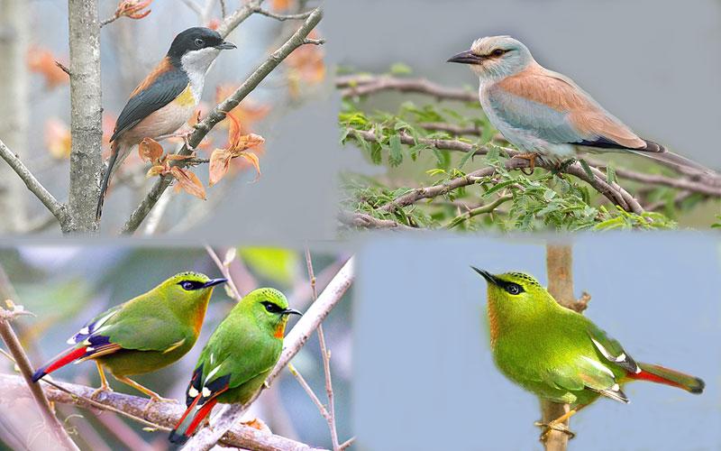 eagle-nest-wildlife-sanctuary-bombdila