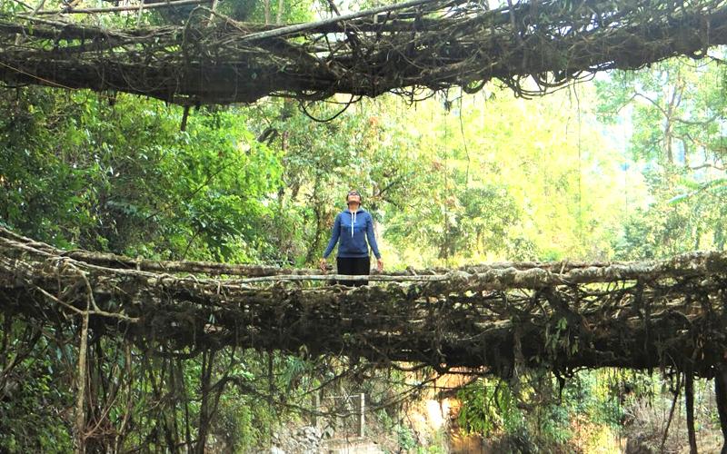the-living-root-bridges-of-cherrapunji-meghalaya