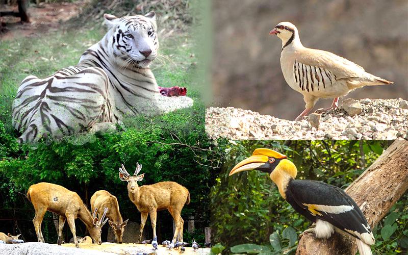 zoologicalparkdimapurnagaland