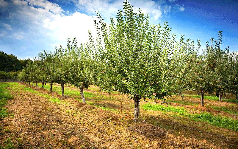 fruitorchardmukteshwer