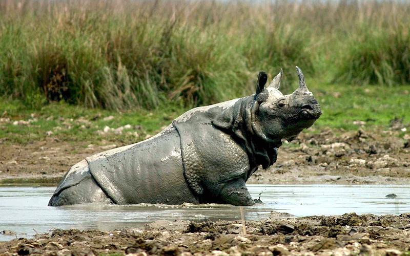 bhitarkanika wildlife sanctuary cuttack india