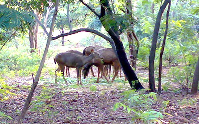 indira gandhi zoological park india