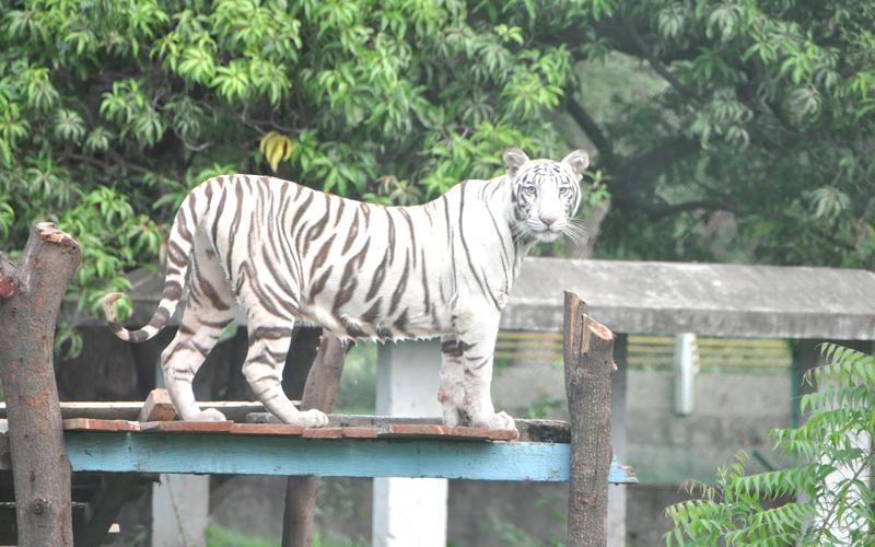 indore zoo india