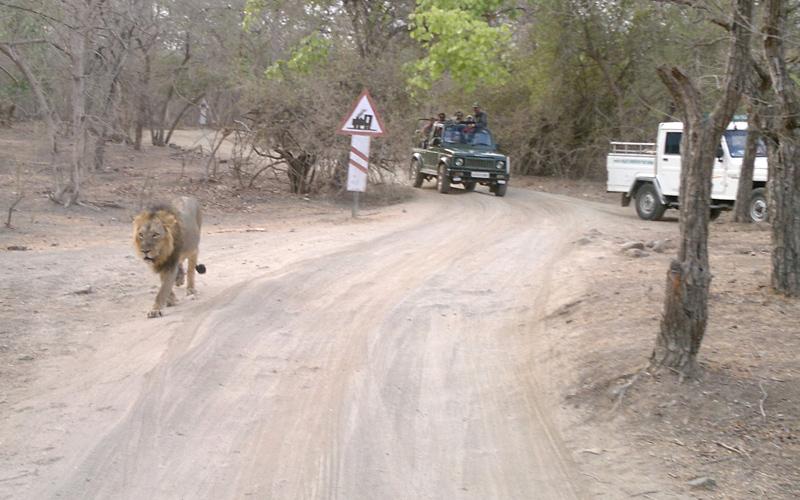 wildlife safari in surat india