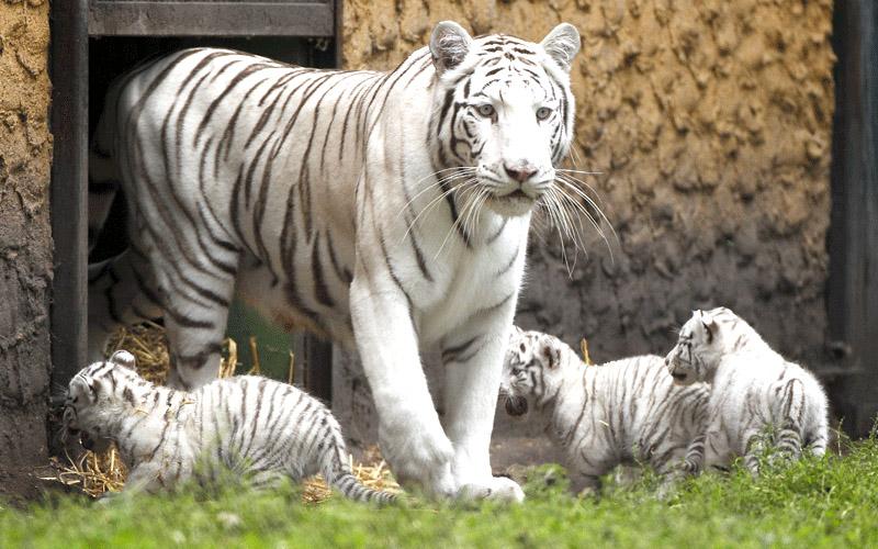 govindgarh zoo near by rewa india