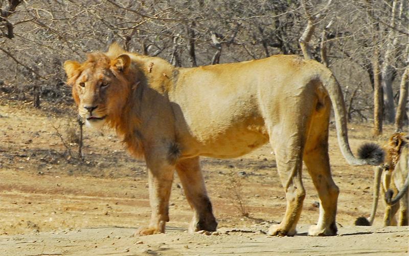 pradyuman zoo rajkot india