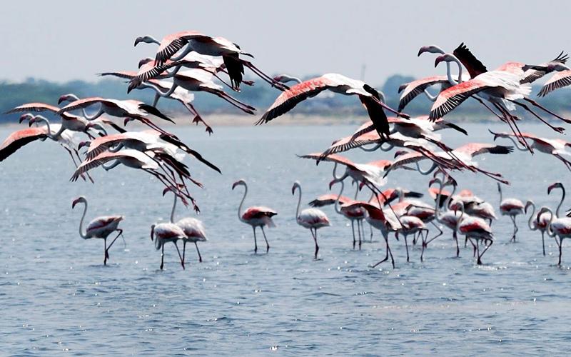 pulicat-lake-india