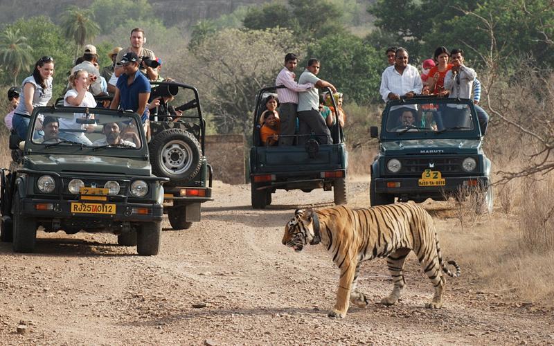 ranthambore-national-park-india