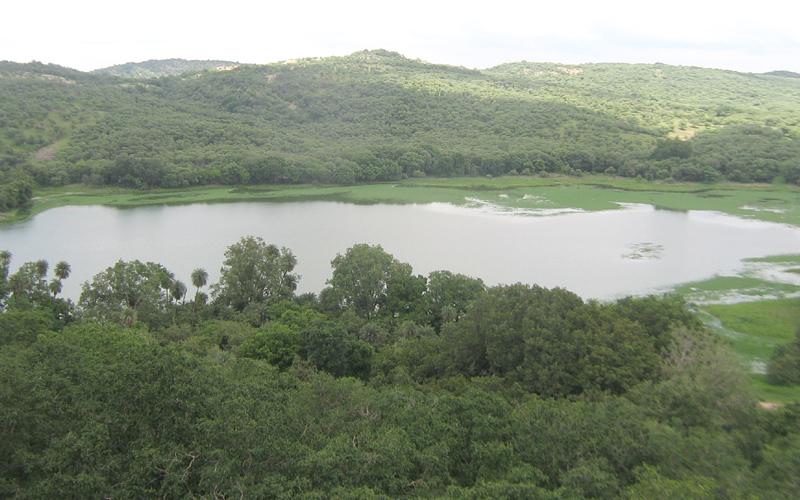 surwal-lake-india