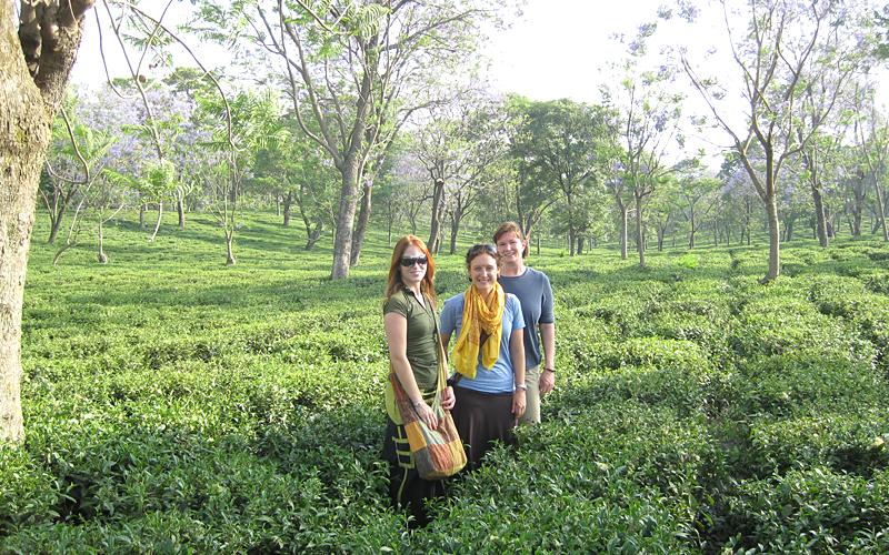 tea-gardens-india