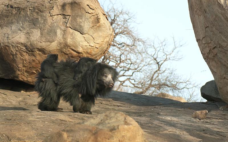 bellary-zoo-india